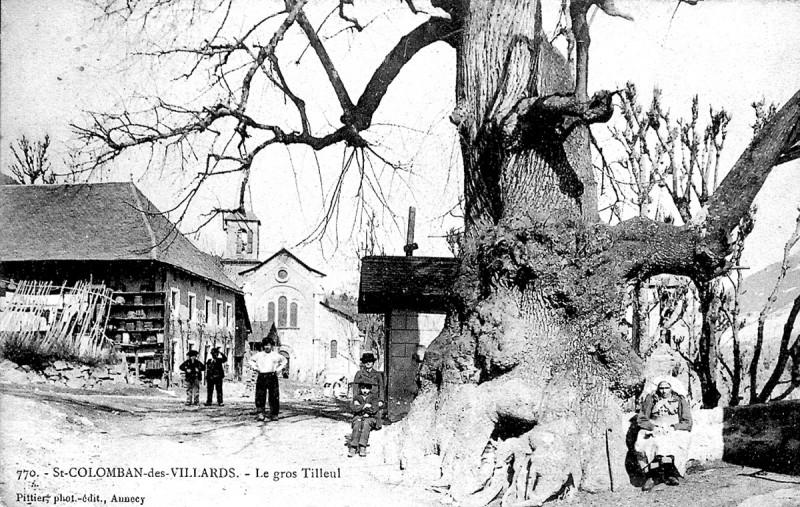 Le gros tilleul classé arbre remarquable de France